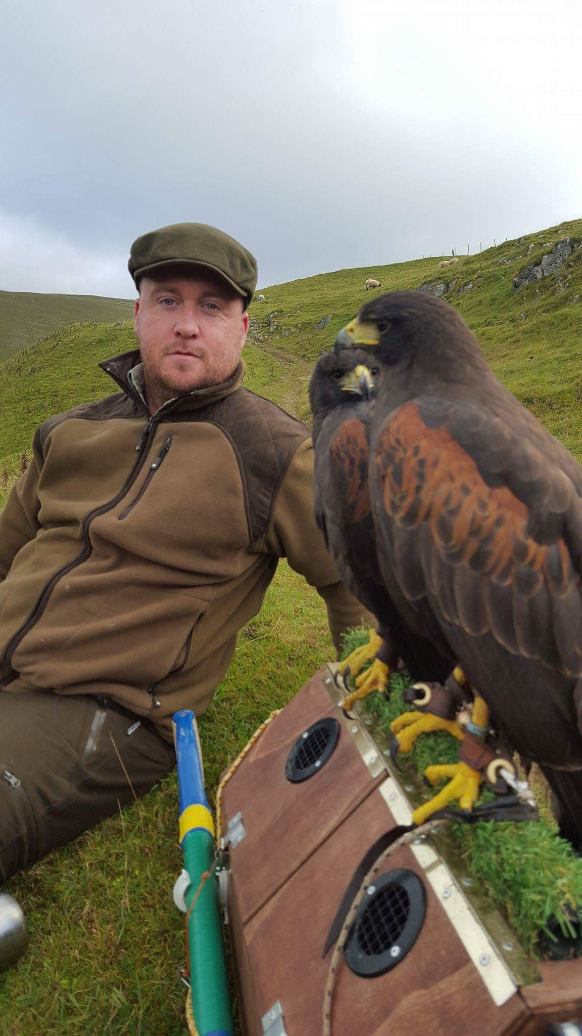 Scott and Harris hawk cast
